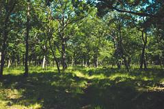 KRIS1368 (Chris.Heart) Tags: túra hiking hungary nature okt kéktúra
