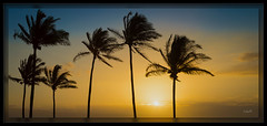 Evening in Paradise (cwaynefox) Tags: gold hawaii maui usa unitedstates kapalua ocean palmtree sunset