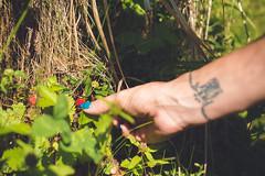 KRIS1385 (Chris.Heart) Tags: túra hiking hungary nature okt kéktúra