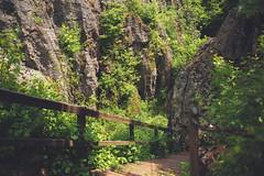 KRIS1474 (Chris.Heart) Tags: túra hiking hungary nature okt kéktúra