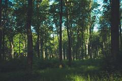 KRIS1585 (Chris.Heart) Tags: túra hiking nature okt hungary természet