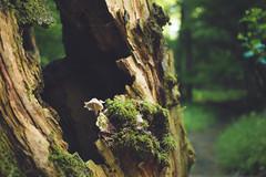 KRIS1605 (Chris.Heart) Tags: túra hiking nature okt hungary természet