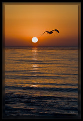 Headed Home (cwaynefox) Tags: 066ar openedition fineart gallery landscape ocean scenic seagull seascape sunset