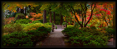 The Moon Bridge (cwaynefox) Tags: fall limitededition oregon portlandjapanesegarden tree usa unitedstates fineart gallery landscape scenic