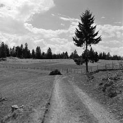 * (Bernád Rozália) Tags: analoque film bw blackandwhite landscape yashicamat124g fomapan100 fomadonr09 epsonv700 scan selfdeveloped spring