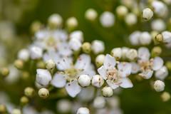 Back Garden Nature (chris_m03) Tags: flowers closeup garden nikon 105mm