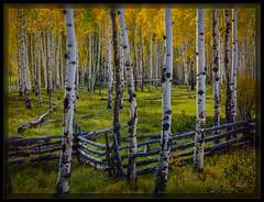 160928_Colorado_HeliconStack-PS_PD (cwaynefox) Tags: gallery purple