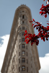 Flatiron Spring (kareszzz) Tags: 2019 canon canon6d travel usa flatiron spring flatironbuilding flatirondistrict ny nyc newyork manhattan us red leaves nature