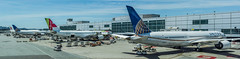 international terminal g gates (pbo31) Tags: bayarea california sanmateocounty nikon d810 color june 2019 boury pbo31 sanfranciscointernational sfo airport aviation airline plane travel sanbruno over boeing 787 united 777 panorama large stitched panoramic airchina 747 blue