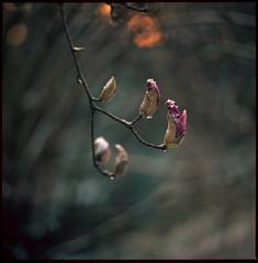 spring scenery #9 (moonchild1111) Tags: carlzeissfplanar110mmf2t hasselblad2000fc kodakportra160 6x6 negative