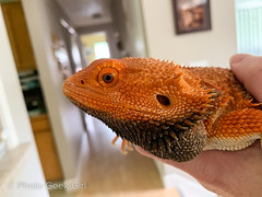 Project 365/Day 161: Angry Beardie