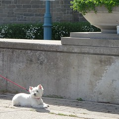 This cute dog was waiting patiently .. (Trinimusic2008 -blessings) Tags: trinimusic2008 judymeikle nature today spring june2019walkwithpeggy toronto to ontario canada dog pet promenade waterfrontrecreationaltrail asharedpath