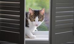 Hiding In Plain Sight (ehpien) Tags: dsc07775