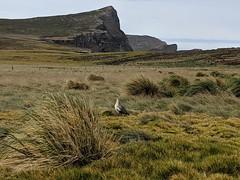 New Island, Falkland Islands (Buster&Bubby) Tags: newisland falklandislands