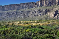 A Look Across a Field of Trees to the Sierra Ponce Cliffs (Big Bend National Park)