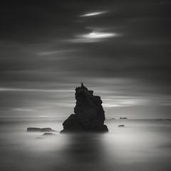 sonoma coast (nlwirth) Tags: nlwirth yup sonomacoast sonomacounty california rock clouds sea ocean water light cormorant longexposure blackandwhite crust shadow