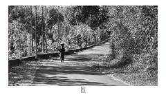 Woman with the basket (krishartsphotography) Tags: krishnansrinivasan krishnan srinivasan krish arts photography monochrome fineart fine art woman basket firewoods forest hills kolli shadow shade trees road bend narrow evening dusk affinity photo silver efex pro dxo fuji xpro2 helios 58mm f2 m42 tamilnadu india