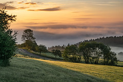 (Woewwesch) Tags: sunrise cloudy outdoor interesting path green hills trees walking morning morningwalk woods forest eifel germany paradise early fog colors golden sonyalpha ilce6000 newday