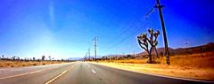 Approaching Joshua Tree (EmperorNorton47) Tags: joshuatree california photo digital spring yuccabrevifolia road highway vanishingpoint desert cropped panorama electricalpoles powerlines videocapture n56dashcam
