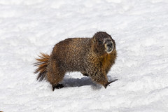 Marmot1200 (jmorgan41383) Tags: