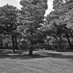 Nijō Castle, Kyoto, Japan (КлементГ) Tags: tlr twinslensreflex japan japon nihon nijō castle kyoto honshu 二条城 yashicamat124 yashica kodak trix film argentique analog 6x6 moyenformat monochrome noirblanc blackwhite noir et blanc extérieur ciel stairs architecture monument