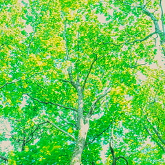 19990601_IMG_0004-trm-mod (NAMARA EXPRESS) Tags: landscape view style form shape plant color tree texture film japan canon hokkaido outdoor scanner fine scan hasselblad velvia fujifilm daytime canoscan rvp carlzeiss 9000f namaraexp summer saroma f28 planar 80mm 500cm