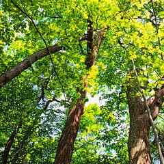 19990601_IMG_0001-trm-mod (NAMARA EXPRESS) Tags: plant color tree texture landscape view outdoor fine style daytime form shape film japan canon hokkaido scanner scan hasselblad velvia fujifilm canoscan rvp carlzeiss 9000f namaraexp summer f28 planar 80mm 500cm saroma