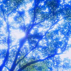 19990531_IMG_0005-trm-mod (NAMARA EXPRESS) Tags: plant tree texture landscape spring view outdoor fine style daytime form shape color film japan canon hokkaido scanner scan hasselblad velvia fujifilm canoscan rvp carlzeiss 9000f namaraexp saroma f28 planar 80mm 500cm