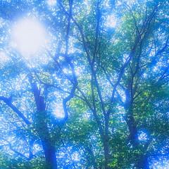 19990531_IMG_0004-trm-mod (NAMARA EXPRESS) Tags: plant tree texture landscape spring view style form shape color film japan canon hokkaido outdoor scanner fine scan hasselblad velvia fujifilm daytime canoscan rvp carlzeiss 9000f namaraexp saroma f28 planar 80mm 500cm