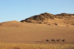 Caravan du Sud (Simoniini) Tags: marokko marocco desert wüste caravan camel kamel karavane caravandusud