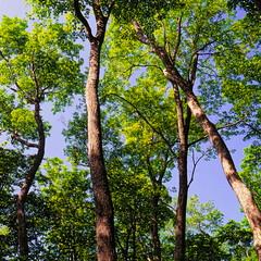 19990601_IMG_0006-trm-mod (NAMARA EXPRESS) Tags: plant tree texture landscape view style form shape color film japan canon hokkaido outdoor scanner fine scan hasselblad velvia fujifilm daytime canoscan rvp carlzeiss 9000f namaraexp summer saroma f28 planar 80mm 500cm