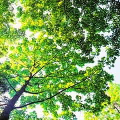 19990601_IMG_0005-trm-mod (NAMARA EXPRESS) Tags: plant tree texture landscape view style form shape color film japan canon hokkaido outdoor scanner fine scan hasselblad velvia fujifilm daytime canoscan rvp carlzeiss 9000f namaraexp summer f28 planar 80mm 500cm saroma