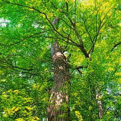 19990601_IMG_0002-trm-mod (NAMARA EXPRESS) Tags: plant color tree texture landscape view outdoor fine style daytime form shape film japan canon hokkaido scanner scan hasselblad velvia fujifilm canoscan rvp carlzeiss 9000f namaraexp summer f28 planar 80mm 500cm saroma
