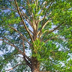 19990531_IMG_0006-trm-mod (NAMARA EXPRESS) Tags: plant color tree texture landscape spring view outdoor fine style daytime form shape film japan canon hokkaido scanner scan hasselblad velvia fujifilm canoscan rvp carlzeiss 9000f namaraexp saroma f28 planar 80mm 500cm