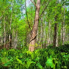 19990531_IMG_0003-trm-mod (NAMARA EXPRESS) Tags: plant color tree texture landscape spring view outdoor fine style daytime form shape film japan canon hokkaido scanner scan hasselblad velvia fujifilm canoscan rvp carlzeiss 9000f namaraexp saroma f28 planar 80mm 500cm