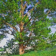 19990531_IMG_0007-trm-mod (NAMARA EXPRESS) Tags: plant color tree texture landscape spring view outdoor fine style daytime form shape film japan canon hokkaido scanner scan hasselblad velvia fujifilm canoscan rvp carlzeiss 9000f namaraexp f28 planar 80mm 500cm saroma