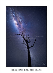 Milky Way galactic core shining brightly over old dead tree (sugarbellaleah) Tags: milkyway galacticcore night sky stars astrophotography astronomy starry twinkling pretty tree silhouette gnarly deadtree treetrunk suns space universe science realm galaxy light glendavis capertee valley australia evening wonder