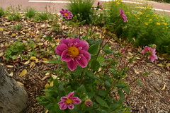 Durango (eitb.eus) Tags: eitbcom 1548 g150826 tiemponaturaleza tiempon2019 primavera bizkaia durango nereaaagirre