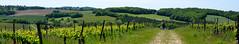 """De la vigne aux sous-bois (Brigitte .. . """"Tatie Clic"""") Tags: 20170509 mai printemps paysage vigne vignoble monderural campagne personnes sentier chemin campagnefrançaise colline panorama panoramique marquepage lotetgaronne aquitaine francesudouest vert verdure fabuleuse"""