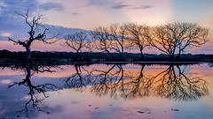Morning Sermon (Chamikajperera) Tags: sunrise morning trees dead color reflection sri lanka ceylon landscape shapes find art