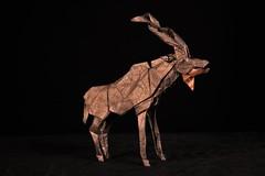 Kudu (Djangorigami) Tags: bellecombeenbauges savoie france origami photography papier pliage modèle animals colors