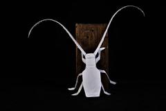 Longhorn beetle (Djangorigami) Tags: bellecombeenbauges savoie france origami photography papier pliage modèle animals colors