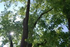 Also hat Gott die Welt geliebt (amras_de) Tags: frühling primavera proljece jaro forår spring printempo printemps earrach tavasz vor ver fréijoer pavasaris lente vår prima wiosna primavara ware jar pomlad baum træ stablo boom árbol drvo arbre strom tree arbo puu zuhaitz crann fa arbore tré albero arbor medis koks tre drzewo árvore àrvulu drevo träd agaç