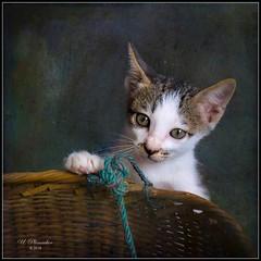 Cute Kitten (ulli_p) Tags: asia art artofimages aworkofart canon750d cat flickraward kitten ruralthailand southeastasia thailand texture textured texturedphoto