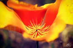 Flor sicodélica (Amy Charlize) Tags: amycharlize focosocial awesome amazing flower nature naturaleza color flor shapes forma life