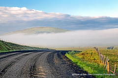 Another Road Shot (Gary Grossman) Tags: prairie road zumwalt landscape morning early fence cattle cows livestock oregon northwest clouds fog nature garygrossman garygrossmanphotography landscapephotography zumwaltprairie cattlecountry gravelroad pacificnorthwest