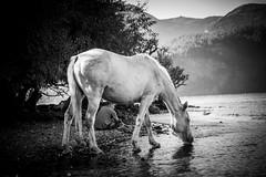 Two (.KiLTЯo.) Tags: kiltro ar argentina quilaquina lagolácar lácar lake lago water horse animal man people nature wildlife wild elitegalleryaoi bestcapturesaoi hank you