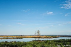 190528-50 Marécage (clamato39) Tags: marais marsh ciel sky eau water nature paysage landscape captourmente provincedequébec québec canada olympus