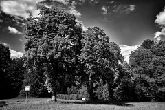 Blühende Kastanien (Helmut Reichelt) Tags: bw sw kastanien bäume blühend frühsommer oberland eurasburg mai frühling oberbayern bavaria deutschland germany leica leicam typ240 silverefexpro2 leicasummilux35mmf14asphii