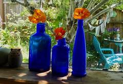Three Nasturtiums (Room With A View) Tags: bluebottles window windowsill flowers nasturtiums